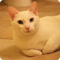 Adopt A Pet :: Blanche - Carlisle, PA