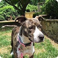 Adopt A Pet :: Nala - Charlotte, NC