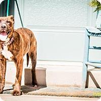 Adopt A Pet :: Isolde - Salt Lake City, UT