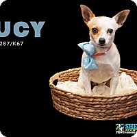 Adopt A Pet :: Lucy - San Angelo, TX