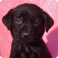 Adopt A Pet :: Tucker - Enfield, CT