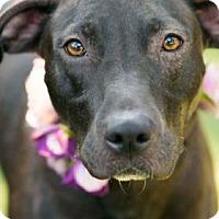 Adopt A Pet :: Emma Jane + - Santa Fe, TX