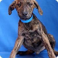 Adopt A Pet :: Nautilus - Waldorf, MD