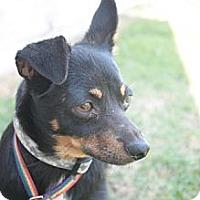 Adopt A Pet :: Rutt - Stilwell, OK