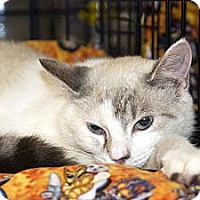 Adopt A Pet :: Stormy - New Port Richey, FL