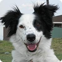Adopt A Pet :: Ms. America - Cheyenne, WY