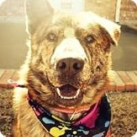 Adopt A Pet :: Solita - New Boston, NH