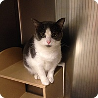Adopt A Pet :: Oliver - Muncie, IN