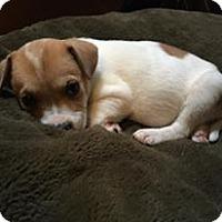 Adopt A Pet :: Elsa - Nashville, TN
