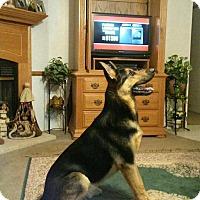 Adopt A Pet :: Nikko - Conway, AR