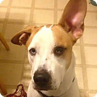 Adopt A Pet :: Daisy - Marlton, NJ