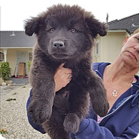 Adopt A Pet :: TRITON - Winnetka, CA