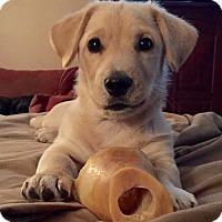 Adopt A Pet :: Cooper - Sagaponack, NY