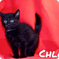 Adopt A Pet :: Chloe - Batesville, AR