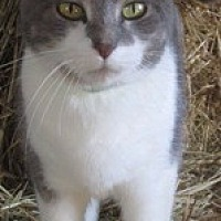 Adopt A Pet :: Chole G - Sistersville, WV