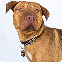 Adopt A Pet :: Alfie - Livonia, MI