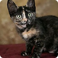 Adopt A Pet :: Orange Blossom - Eagan, MN