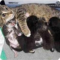 Adopt A Pet :: Jo - Richmond, VA