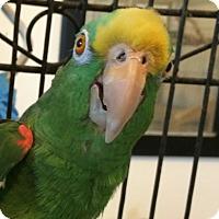 Adopt A Pet :: Chico & Rico - Punta Gorda, FL