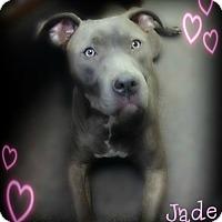 Adopt A Pet :: Jade - Pascagoula, MS