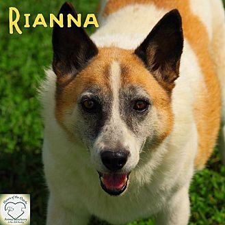 Shepherd (Unknown Type)/Husky Mix Dog for adoption in Washburn, Missouri - Rianna