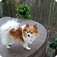 Adopt A Pet :: Trinity - conroe, TX