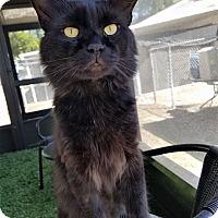 Adopt A Pet :: Peppo - Umatilla, FL