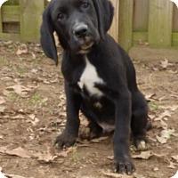 Adopt A Pet :: Augie - Bedminster, NJ