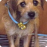 Adopt A Pet :: Louise - Tavares, FL