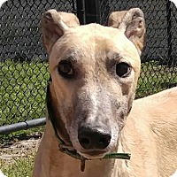 Adopt A Pet :: Master Blaster - Longwood, FL