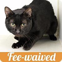 Adopt A Pet :: Geri - Atlanta, GA