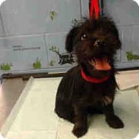 Adopt A Pet :: URGENT ON 5/30  San Bernardino - San Bernardino, CA