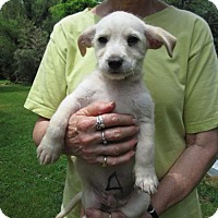 Adopt A Pet :: BRINKLEY - Lincolndale, NY