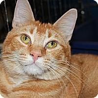 Adopt A Pet :: Morris - Santa Monica, CA