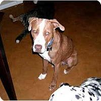 Adopt A Pet :: Toby Boy - Scottsdale, AZ