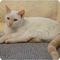 Adopt A Pet :: June Bug - Modesto, CA