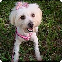 Adopt A Pet :: Maggy - Gulfport, FL