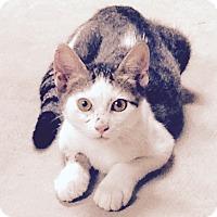 Adopt A Pet :: Vince - Lake Charles, LA