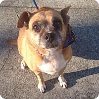 Adopt A Pet :: LILY - LEXINGTON, KY