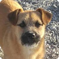 Adopt A Pet :: Paddington - Brattleboro, VT