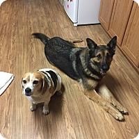 Adopt A Pet :: Dinah (Guest) - Roswell, GA