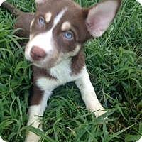 Adopt A Pet :: Skye - Marlton, NJ