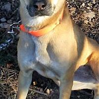 Adopt A Pet :: Bess - Dale, IN