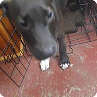 Adopt A Pet :: Valiant - Jarrell, TX