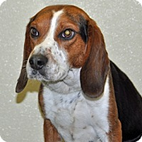 Adopt A Pet :: Regal - Port Washington, NY