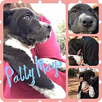 Adopt A Pet :: Patty Mays - Hearne, TX