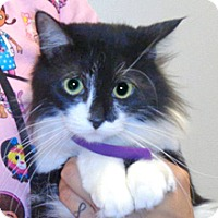 Adopt A Pet :: Lucy - Wildomar, CA