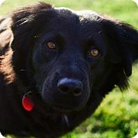 Adopt A Pet :: Bella - Greenwood, SC