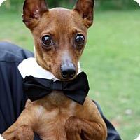 Adopt A Pet :: Hershel - Norman, OK