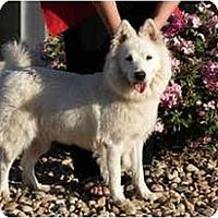 Adopt A Pet :: Maya - Arvada, CO